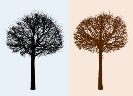 Silhouettes of the deciduous trees without leaves. Illustration