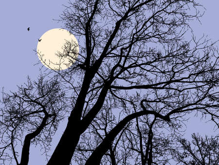 Trees in a moonlit night.