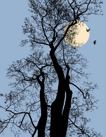 Trees silhouettes in the night forest Illustration