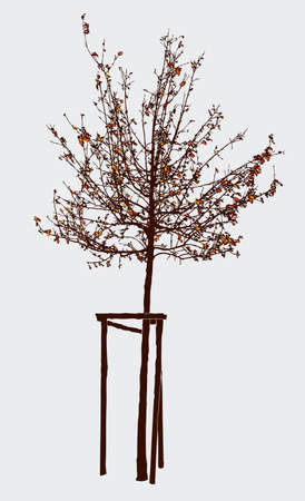 Young tree in autumn.