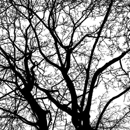 Silhouettes of deciduous trees in winter