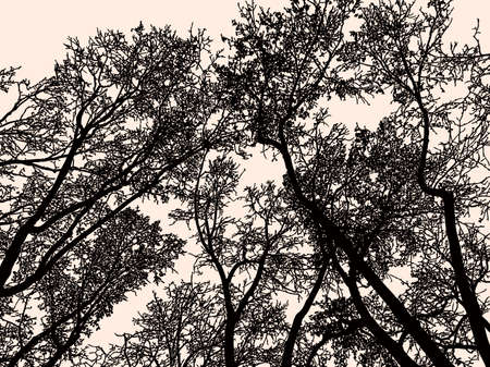 Silhouettes of deciduous trees in winter Illustration