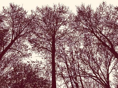 Silhouettes of trees in autumn forest Illusztráció
