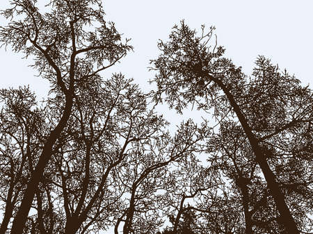The trees silhouettes in winter park Illusztráció