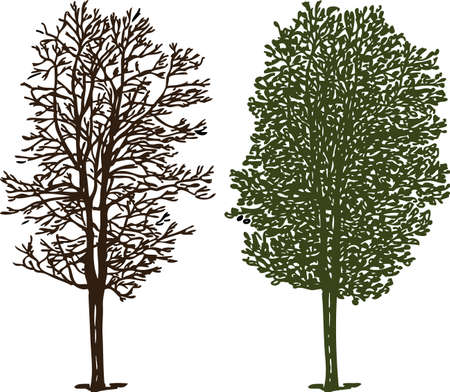 Tree silhouettes in winter and in summer Illustration