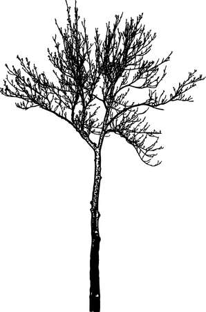 Vector image of a tree silhouette in winter