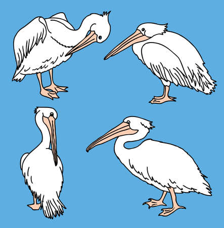 Vector image of pelicans in various poses
