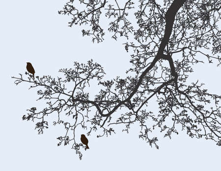 Image vectorielle d'une branche d'arbre à feuilles caduques au printemps Vecteurs