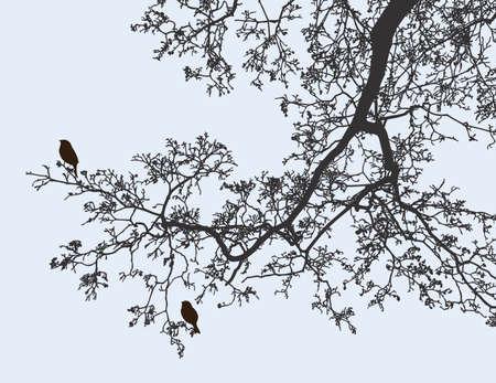 Immagine vettoriale di un ramo di albero a foglie decidue in primavera Vettoriali