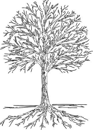 Contour drawing of a tree silhouette with roots