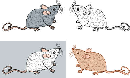Vector image of the small rats