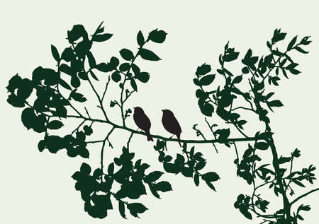 Silhouettes of tree branches with birds in summer