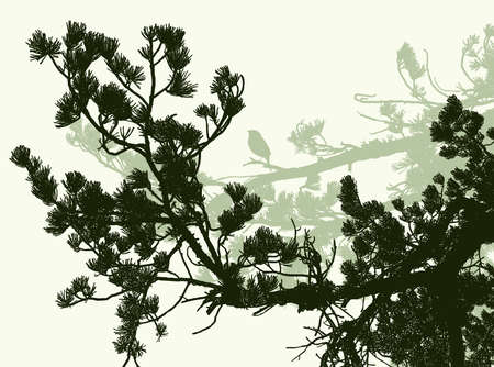 Vector illustration of silhouettes of branches of mediterranean pine tree