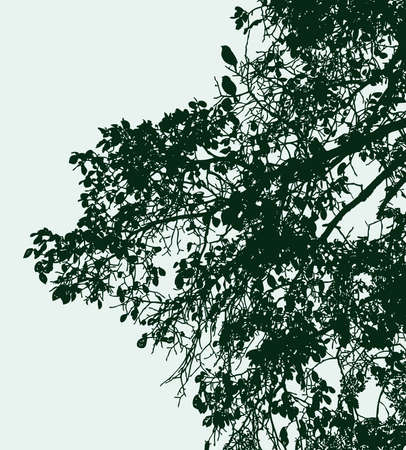 Vector image of branches silhouettes of deciduous tree in summer