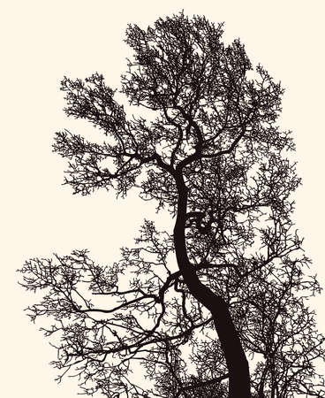 Vector image of deciduous tree silhouette in winter Illustration