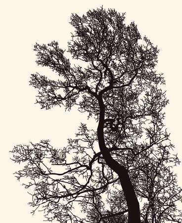Vector image of deciduous tree silhouette in winter Illusztráció