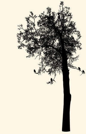 Vector image of silhouette of deciduous tree in cold season