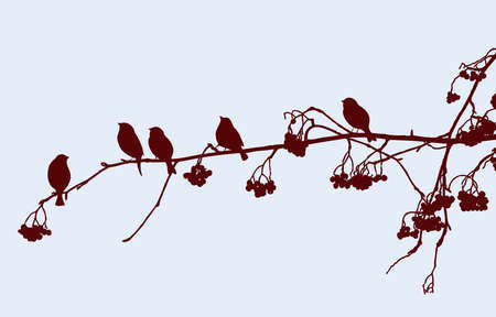 Vector image of silhouettes of birds sitting on rowan branch in winter