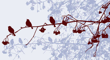 Vector image of silhouettes of sparrows on rowan branches in autumn park