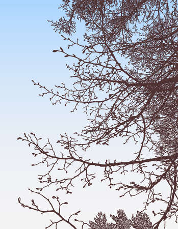 Vector illustration of silhouettes tree branches with buds in spring forest against morning sky