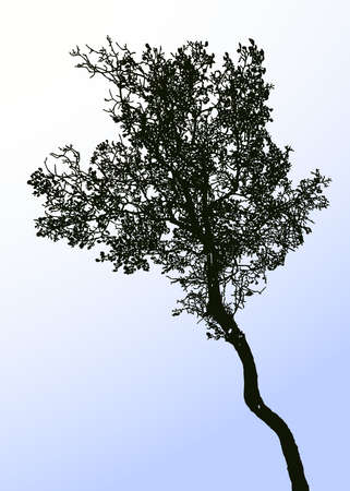 Vector image of silhouette deciduous tree against blue sky Stock Illustratie