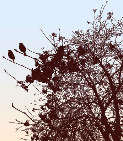 Vector drawing of silhouettes birds sitting on rowan branches in autumn season