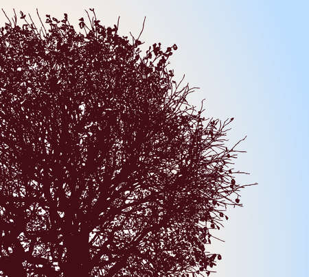Vector illustration of silhouette deciduous tree in autumn against blue sky