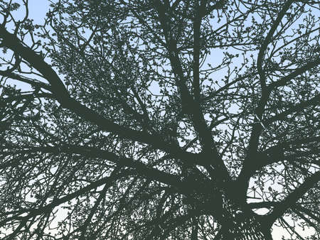 Vector illustration of silhouette old tree against blue morning sky