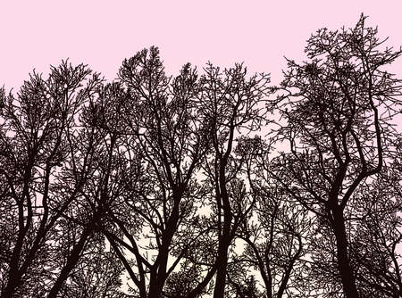 Vector image of silhouettes trees in early morning in springtime