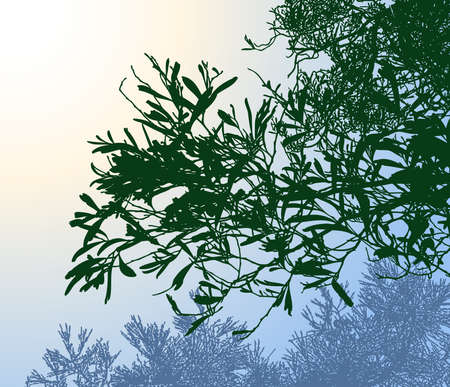 Vector image of silhouette branches of deciduous tree in morninng forest