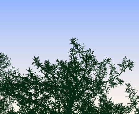 Vector image of silhouettes branches of spruce tree against morning sky