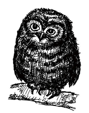 Freehand drawing of an owlet sitting on tree branch
