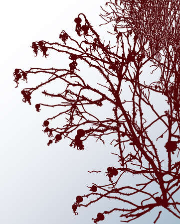 Vector image of silhouettes branches wild rose on snowy lawn on winter frosty day