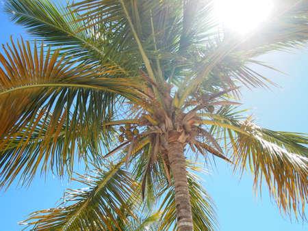 dominican republic: Dominican Republic