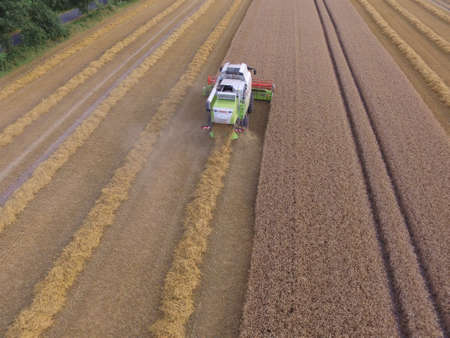 rewarding: grain harvest