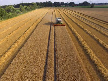 automatically: grain harvest