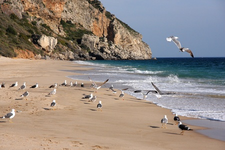 cliff and seagulls in Nazare, Portugal  Stock Photo - 13985169