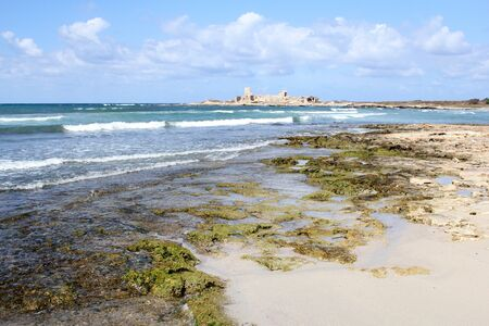 trapani: algae on the beach in Trapani, Sicily, Italy