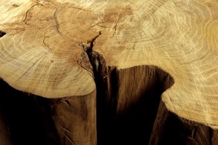 acacia trunk