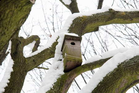 nesting box on a snow covered tree photo