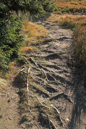 path in mountains covered by the roots photo