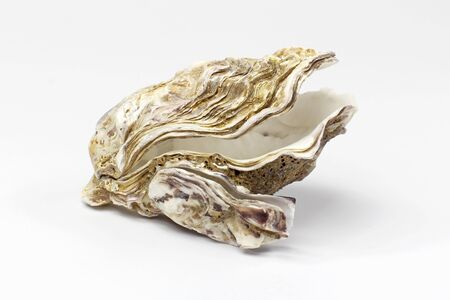 oyster shell isolated on white background photo