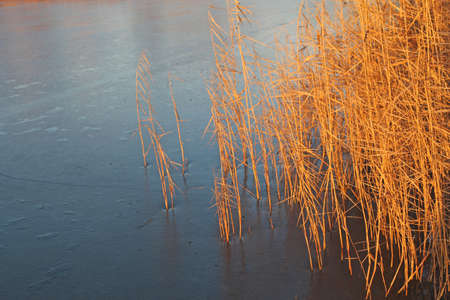 frozen lake and reed photo