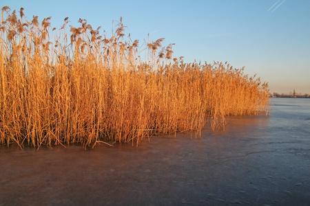 scrub grass: reed and frozen lake Stock Photo