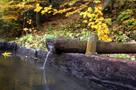 Fresh water spring with wooden channel in autumn forest
