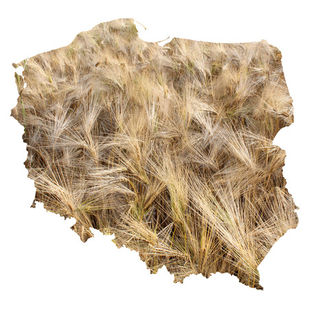 barley field: Poland map with barley field background