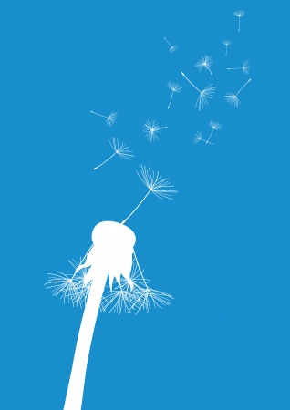 posterity: white dandelion with flying seeds on blue background
