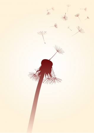 blown: dandelion with blown away seeds