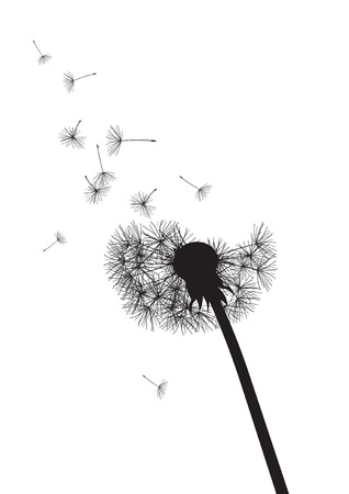 summer nature: black and whte dandelion loosing his integrity  Illustration