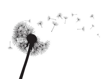 pissenlit noir perdre son intégrité sur le vent Vecteurs